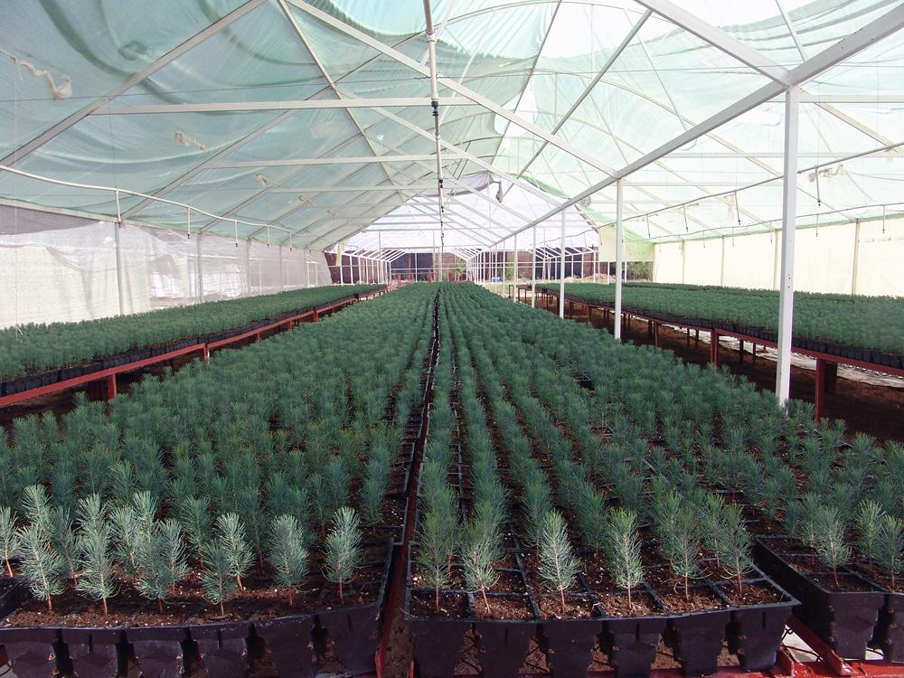 Semillas y plantas c sped praderas leguminosas maiz for Partes de un vivero forestal