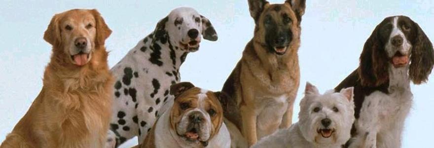 Ingenieria agricola rodriguez - Pienso para perros de caza ...